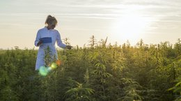Canopy Growth Founder Joins a Refreshed, Re-Set and Re-Funded CPH